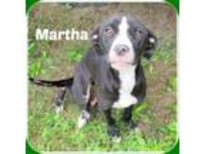 Adopt MARTHA a Black - with White Pointer / Labrador Retriever / Mixed dog in