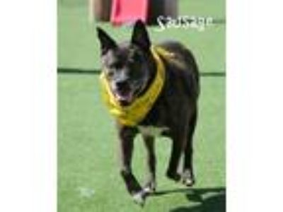 Adopt Sausage a Terrier (Unknown Type, Medium) / Mixed dog in Topeka