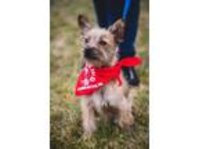 Adopt Stud a Terrier (Unknown Type, Medium) / Mixed dog in Lake Forest