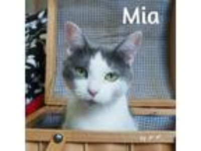 Adopt Mia a White (Mostly) Domestic Shorthair (short coat) cat in Pleasantville