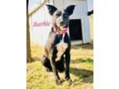 Adopt Barbie a Border Collie, Labrador Retriever