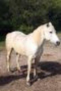 Sassy Arabian Horse