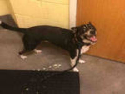 Adopt ROSCOE a Black - with White Border Collie / Mixed dog in Upper Marlboro