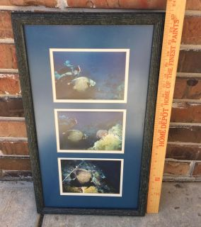 Tropical fish matted picture