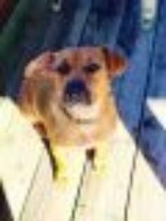 Mercy Dachshund - Terrier Dog