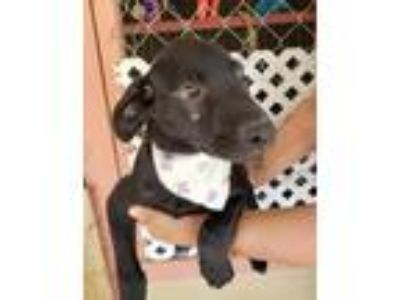 Adopt Odie a Mixed Breed