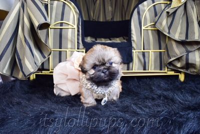 Shih Tzu PUPPY FOR SALE ADN-75334 - AKC Black Mask Shih Tzu Puppies