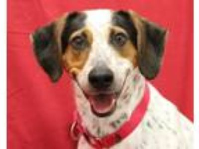 Adopt CAEL a Hound, Mixed Breed