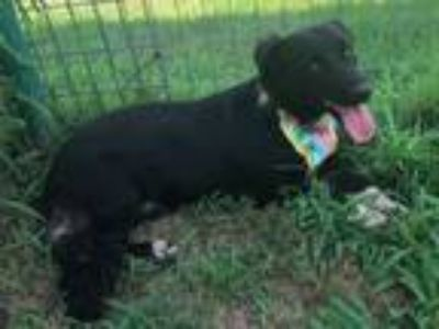 Adopt POTSY a Border Collie