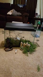 FISH TANK WITH FILTER, LID WITH LIGHT, 2 DECORATIONS AND FLOATING GRASS AND THERMOMETER