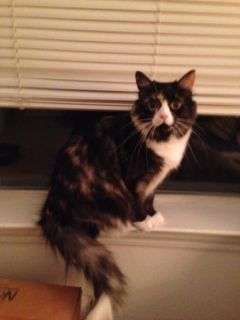 Need Special Home for 4-Year Old Cat Who Lost Her Owner