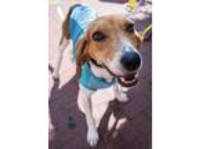 Adopt Leslow -- NEEDS FOSTER a Hound (Unknown Type) / Mixed dog in Washington