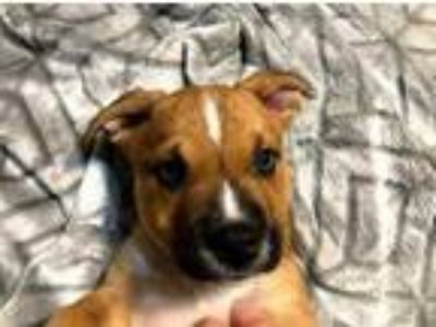 Puppy - For Sale Classifieds in Newcastle, Oklahoma - Claz org