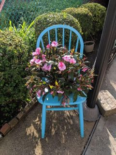 Chair without plant