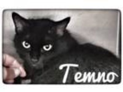 Adopt Temno a Domestic Medium Hair