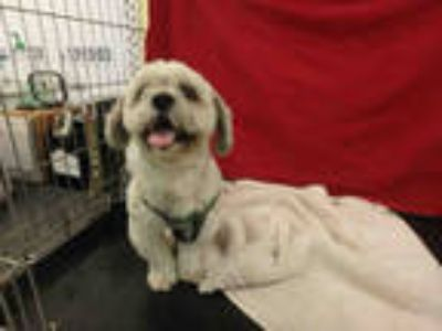 Adopt a White Mixed Breed (Medium) / Mixed dog in Van Nuys, CA (25586842)