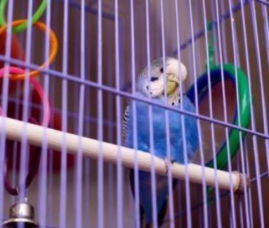 ISO: Bird cage suitable for parakeets