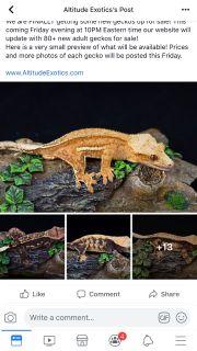Geckos for sale???