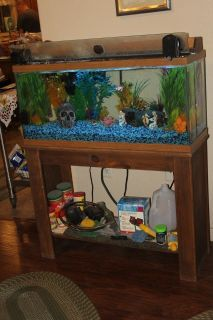 Fish and Fish tank and all on tank