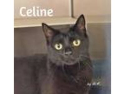 Adopt Celine a All Black Domestic Shorthair (short coat) cat in Pleasantville