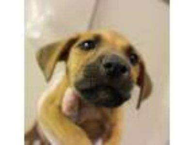 Adopt Lobos a Terrier (Unknown Type, Small) dog in Hattiesburg, MS (25542220)