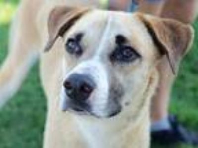 Adopt Sloane a Tan/Yellow/Fawn Mixed Breed (Large) / Mixed dog in Georgetown