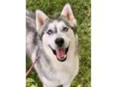 Adopt Creed a Husky