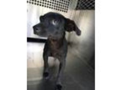 Adopt ADOPTEED PAYTON a Black Dachshund / Mixed dog in Fort Worth, TX (25577742)