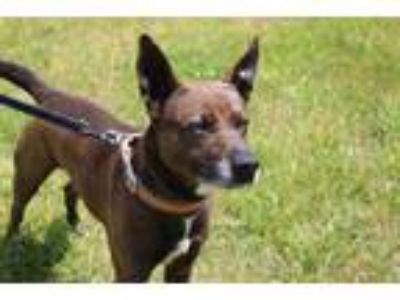 Adopt Grizzly a Terrier (Unknown Type, Small) / Mixed dog in Mocksville