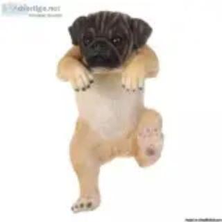Climbing puppy dog