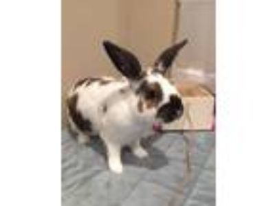 Adopt Rory a Bunny Rabbit