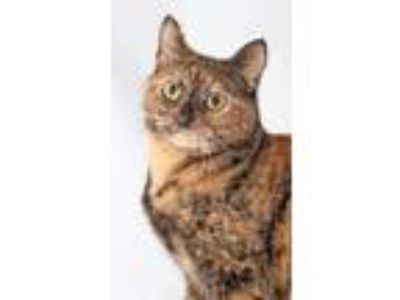 Adopt Reba McEntire a Tortoiseshell Domestic Shorthair (short coat) cat in
