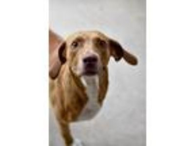 Adopt Fanta a Hound (Unknown Type) / Mixed dog in Canton, GA (25547144)