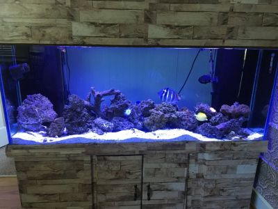 Reef Tank / Fish Aquarium 125 gal (includes rock, sand, lights, sump/skimmer, water purifier)