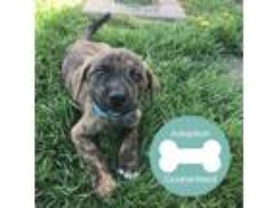 Adopt Snacker a Black Mixed Breed (Medium) / Mixed dog in Janesville