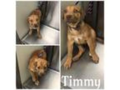 Adopt TIMMY a Brown/Chocolate Mixed Breed (Medium) / Mixed dog in Macon