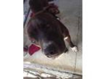Adopt Banjo a Black Mixed Breed (Large) / Mixed dog in Myrtle Beach