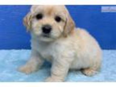 "ABCpuppy: Puppy ID: 1444 ""Money Back Guarantees"""