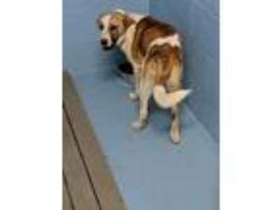 Adopt Blinky a Hound (Unknown Type) / Mixed dog in Mocksville, NC (25532943)