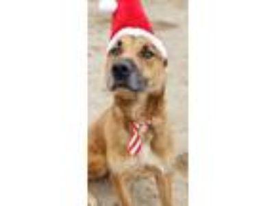 Adopt Bixby a Shepherd, Hound