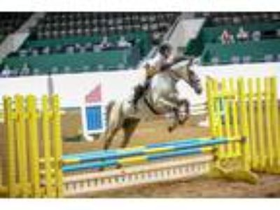 Horse For Partial Lease