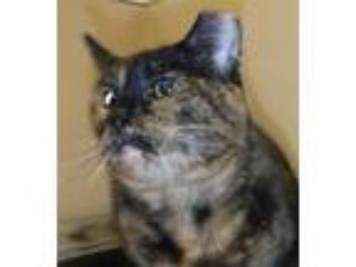 Adopt Cheeks a Domestic Shorthair / Mixed cat in Spokane Valley, WA (25357832)