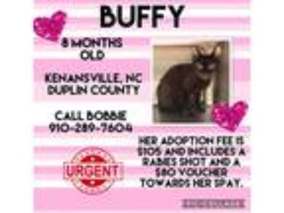 Adopt Buffy a Black (Mostly) Domestic Shorthair (short coat) cat in Kenansville