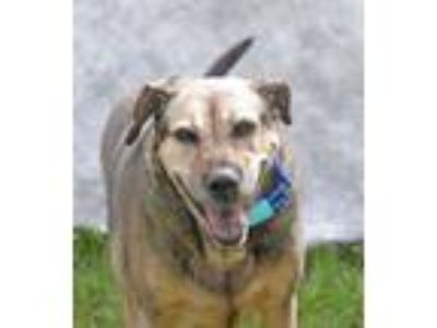 Adopt 42199031 - Available 7/20 @ Fire Station a Cattle Dog