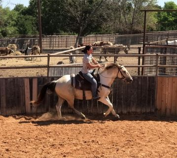 Great all around family horse - 4H, parades, playdays and more