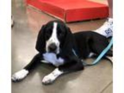 Adopt George a Pointer, Hound