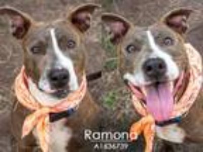 Adopt RAMONA a Staffordshire Bull Terrier, Mixed Breed