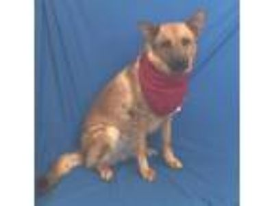 Craigslist - Dogs for Adoption Classifieds in Hondah