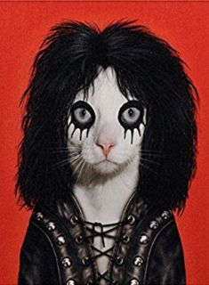 Pets Rock Canvas Art Alice Cooper