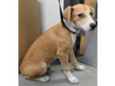 Adopt Nellie a Hound, Mixed Breed